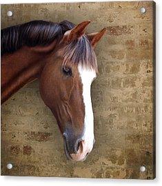 Chestnut Pony Portrait Acrylic Print by Ethiriel  Photography