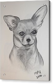 Acrylic Print featuring the drawing Chi Chi by Maria Urso