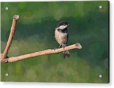 Chickadee On A Stick Acrylic Print by Debbie Portwood