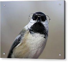 Chickadee Wearing Glasses Acrylic Print by Www.sharp-photo.com