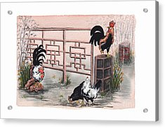 Chickens At The Gate Acrylic Print by Nancy Pahl