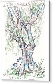 Chico Ca River Tree Acrylic Print by Carol Rashawnna Williams