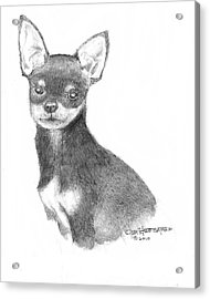 Acrylic Print featuring the drawing Chihuahua by Jim Hubbard