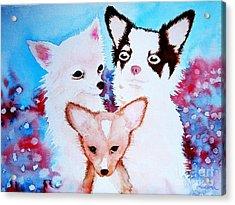 Chihuahuas Acrylic Print