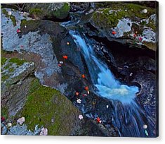 Childs Brook Summer 16 Acrylic Print by George Ramos