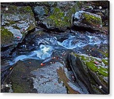 Childs Brook Summer 24 Acrylic Print by George Ramos