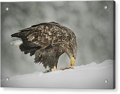 Chilled Dinner Acrylic Print by Andy Astbury