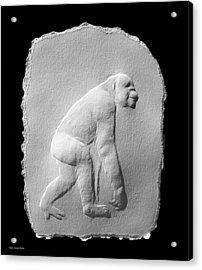 Chimp Acrylic Print by Suhas Tavkar