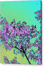 Chinaberry Moon Acrylic Print