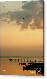 Acrylic Print featuring the photograph Chincoteaque Island by Nicola Fiscarelli