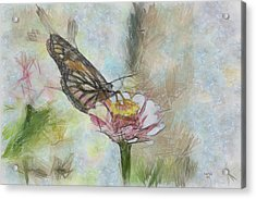 Chinese Butterfly Acrylic Print by Trish Tritz
