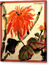 Chinese Mum Acrylic Print by M c Sturman