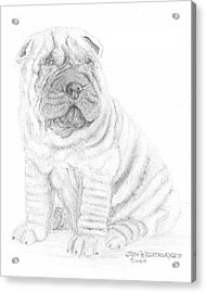 Acrylic Print featuring the drawing Chinese Shar-pei by Jim Hubbard