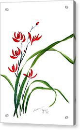 Chinese Wild Orchid 1 Acrylic Print by Alethea McKee