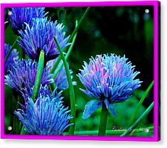Chives For You Acrylic Print