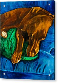 Chocolate Lab On Couch Acrylic Print by Roger Wedegis