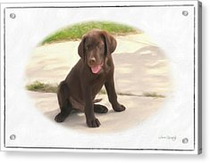 Chocolate Lab Puppy Acrylic Print