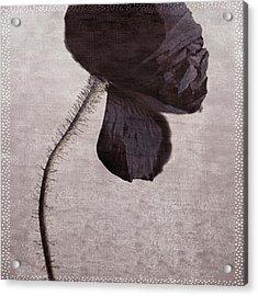 Chocolate Poppy Acrylic Print by Bonnie Bruno