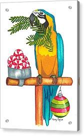 Christmas Macaw Acrylic Print