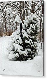 Christmas Tree Acrylic Print by Aimee L Maher Photography and Art Visit ALMGallerydotcom