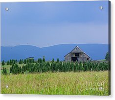 Acrylic Print featuring the photograph Christmas Tree Farm by Eve Spring