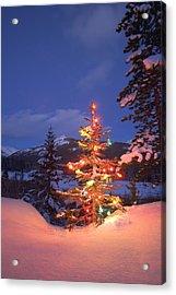 Christmas Tree Outdoors At Night Acrylic Print by Carson Ganci