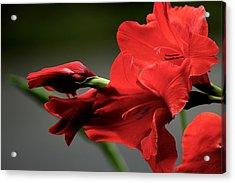 Chromatic Gladiola Acrylic Print