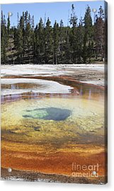 Chromatic Pool Hot Spring, Upper Geyser Acrylic Print by Richard Roscoe