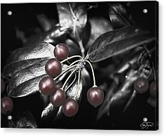 Chrome Holly In Winter Hdr - Artist Cris Hayes Acrylic Print by Cris Hayes