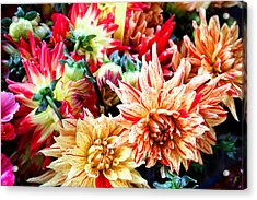 Chrysanthemum Blooms Acrylic Print by Tony Grider