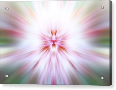 Acrylic Print featuring the photograph Chrysanthemum Burst by Anthony Rego