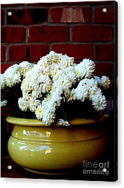 Chrysanthemums In A Yellow Pot Acrylic Print