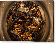 Cicada Madness Acrylic Print