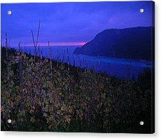 Cinque Terre Vineyard Italy Fine Art Print Acrylic Print by Ian Stevenson