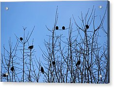Acrylic Print featuring the photograph Circle Of Friends by Kume Bryant