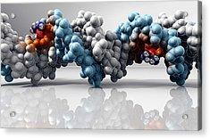 Cisplatin Cancer Drug And Dna Molecule Acrylic Print by Phantatomix