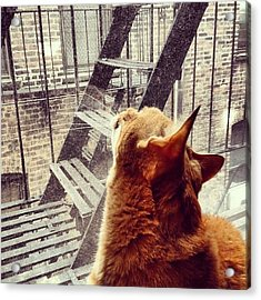 City Cat And Fire Escapes Acrylic Print
