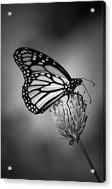Classic Beauty Acrylic Print by Skip Willits