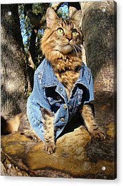 Acrylic Print featuring the photograph Classic Denim by Joann Biondi