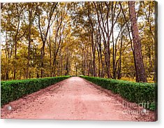 Clay Road In The National Park Acrylic Print by Mongkol Chakritthakool