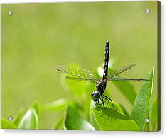 Acrylic Print featuring the photograph Cleared For Take-off by Dan Wells