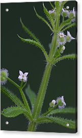 Acrylic Print featuring the photograph Cleavers by Daniel Reed