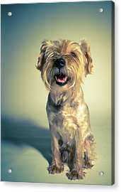 Cleveland Dog Acrylic Print by Square Dog Photography