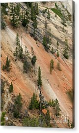 Acrylic Print featuring the photograph Cliff Side Grand Canyon Colors Vertical by Living Color Photography Lorraine Lynch