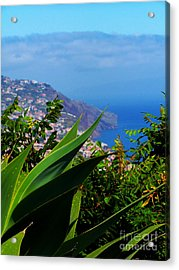 Cliffs Of Madeira Acrylic Print by Patricia Land