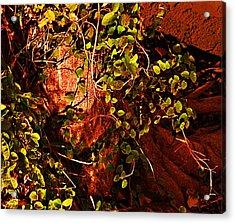 Climbing Magic Plant Acrylic Print by Susana Sanchez Giraud