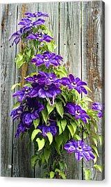 Climbing Purples Acrylic Print by Laura George