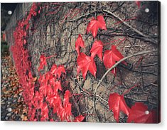 Clinging Acrylic Print by Laurie Search