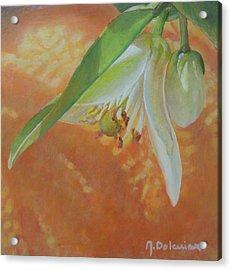 Clochette Orange Acrylic Print by Muriel Dolemieux