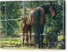 Acrylic Print featuring the photograph Close To Mama by Tyra  OBryant